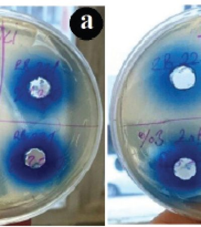 Reaktif Mavi 221 Tekstil Boyasının Değişik Antibakteriyeller Eşliğinde İnaktivasyonu ve Simülasyonu