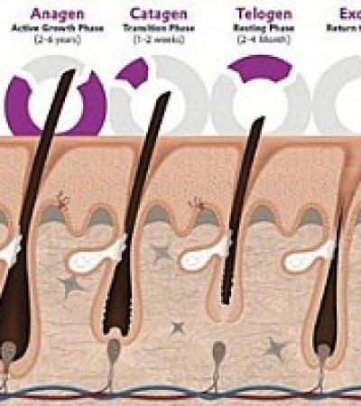 Saç Döngüsünü Dengeleyerek, Saç Köklerini Güçlendirerek Saç Kaybını Önleme