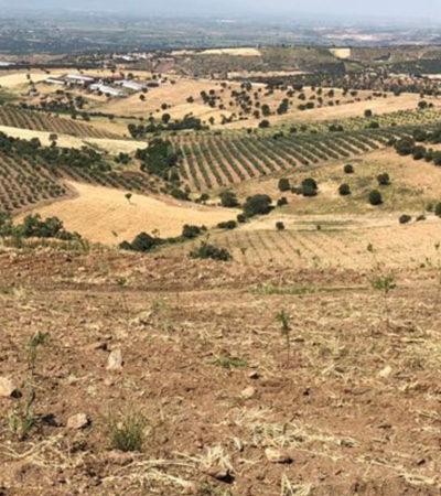 TreeT, Tarım ve Teknolojilerinde Yatırım Fırsatı Sunuyor