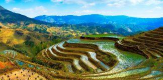 Planet ve BASF'den Tarım için İş Birliği