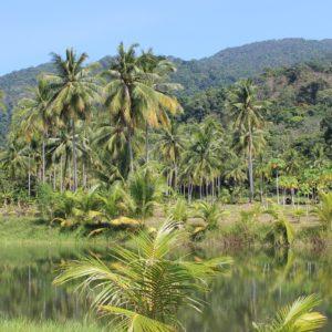 Amazon'da Karbonmonoksit Tehlikesi