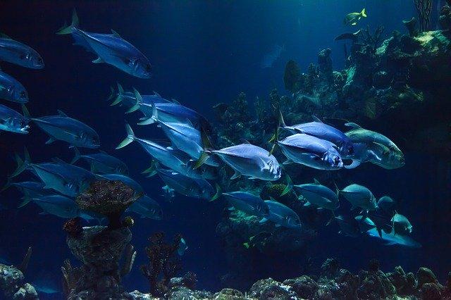Balık Atıklarından Plastik Ambalaj Üretildi