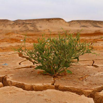 Kordsa, Karbon Saydamlık Projesi İklim Değişikliği Raporu Notunu Yükseltti