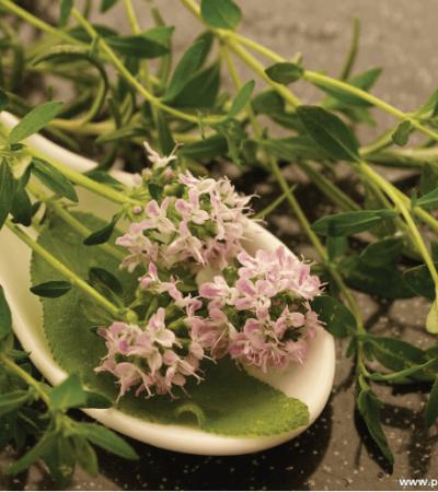 Kekik (Thymus vulgaris L. , Thymus zygis L.) Herba  EMA/307113/2016