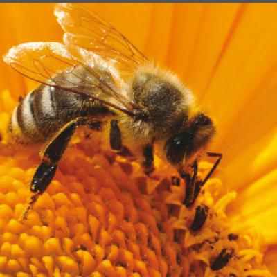 Arılardan Soframıza: Propolis