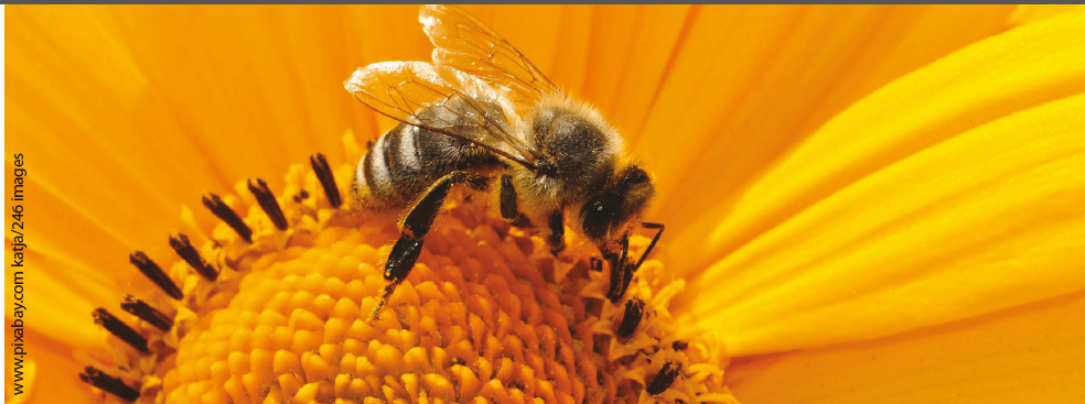 From Bees to Our Table: Propolis