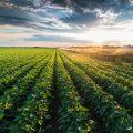 Perstorp, Klorürsüz Potasyum Ürünü İle Gübre Pazarına Giriyor