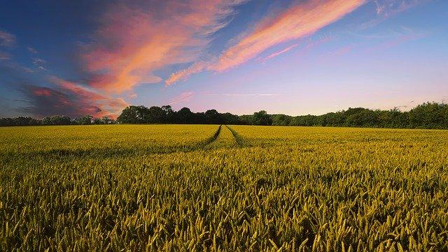 tarım sektörü