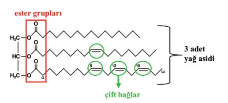 Şekil 4. Yağın trigliserit yapısı