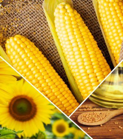 """Cargill, """"1000 Çiftçi 1000 Bereket Programı"""" ile Çiftçiye Destek Oluyor"""