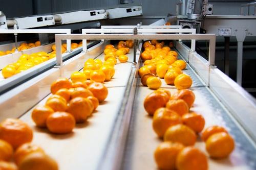 Pandemide Taze Meyve Sebze İhracatı %21 Arttı