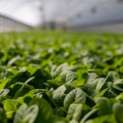 Yerli Üretim Tarımın Geleceğinde Önemli Rol Oynuyor