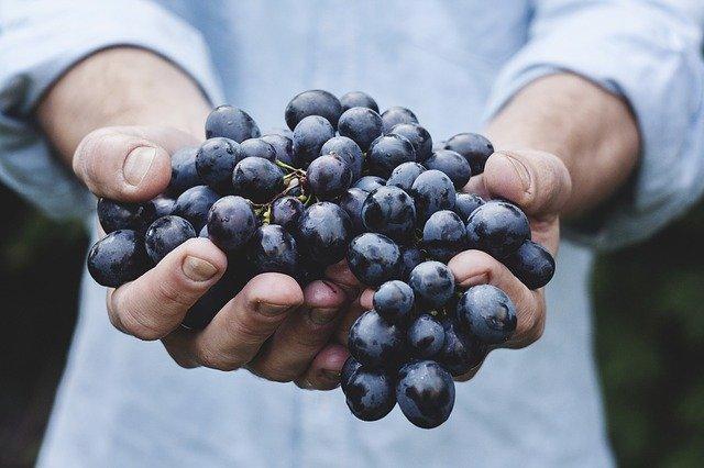 üzüm ihracatı